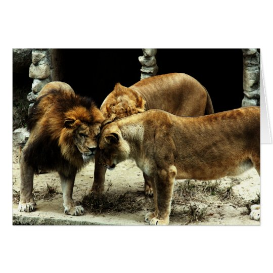 3 Lions Pushing their Heads Together Card