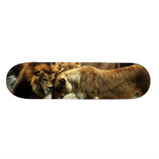 3 Lions Pushing their Heads Together Skateboard