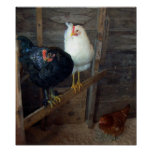 3 Little Hens Poster
