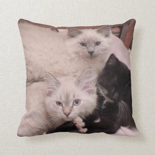 3 Little Kittens Litter Mates Photo Pillow