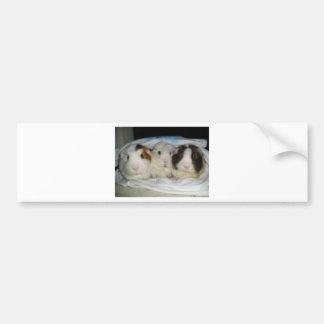 3 little pigs bumper sticker