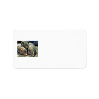 3 Little Pigs Personalized Address Label