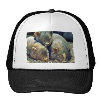 3 Little Pigs Trucker Hat