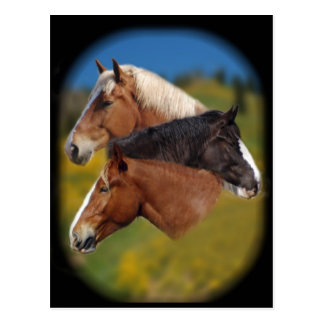 3 mare heads postcard