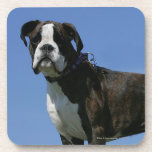 3 Month Old Boxer Puppy Beverage Coaster