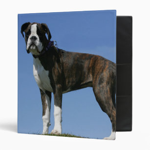 personalize your own boxer puppy binder stay organized today zazzle
