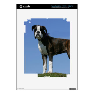 3 Month Old Boxer Puppy Decal For iPad 3