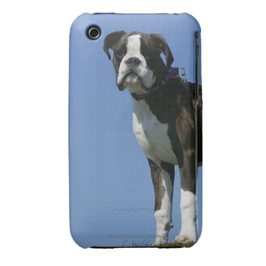 3 Month Old Boxer Puppy iPhone 3 Case