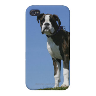 3 Month Old Boxer Puppy Covers For iPhone 4