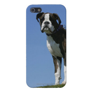 3 Month Old Boxer Puppy iPhone 5 Case