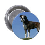 3 Month Old Boxer Puppy Pinback Button