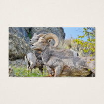 3 Mountain Sheep Trading Card