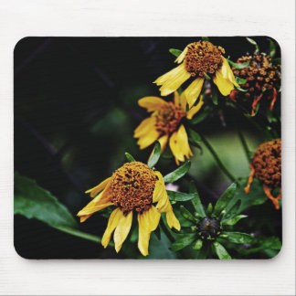 3 muertos amarillos pero flores hermosas tapete de raton