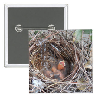 3 new born baby birds in a nest with do not remove 2 inch square button