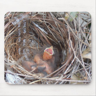 3 new born baby birds in a nest with do not remove mouse pad