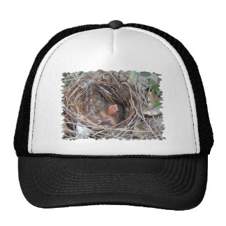 3 new born birds in a nest with do not remove trucker hat