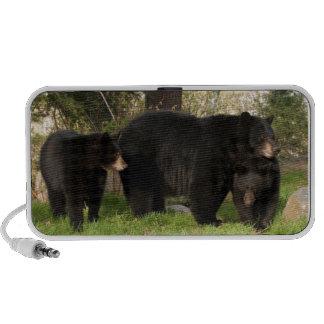 3 osos negros mp3 altavoz