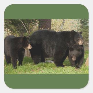 3 osos negros pegatina cuadrada