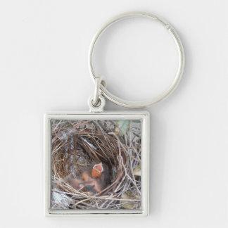 3 pájaros de bebé recién nacidos en una jerarquía llavero cuadrado plateado