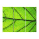 3 Panel Canvas print of Macro Leaf