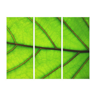 3 Panel Canvas print of Macro Leaf