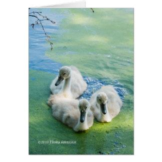 3 pollos del cisne en algas tarjeta de felicitación