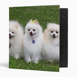 3 Pomeranians Sitting 3 Ring Binder