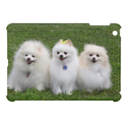 3 Pomeranians Sitting Cover For The iPad Mini