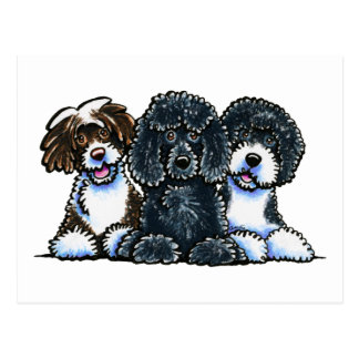3 Portuguese Water Dogs Postcard