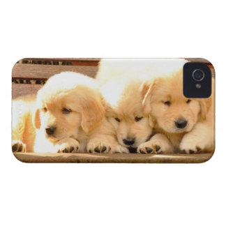 3 Puppies iPhone 4/4S Case