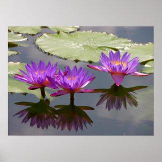 3 rosas exóticas lilas de lago, póster