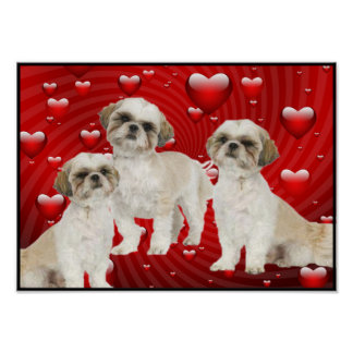 3 Shih Tzu Puppies with Heart Background Poster