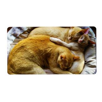 3 Sleeping House Cats Felis Silvestris Catus Label
