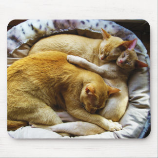 3 Sleeping House Cats Felis Silvestris Catus Mouse Pad