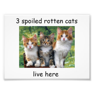 3 spoiled rotten cats live here photo print