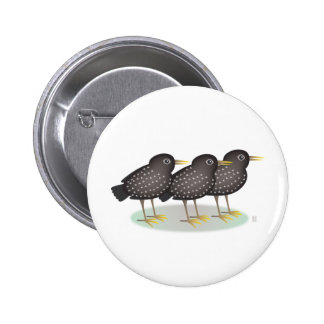 3 starlings pinback button