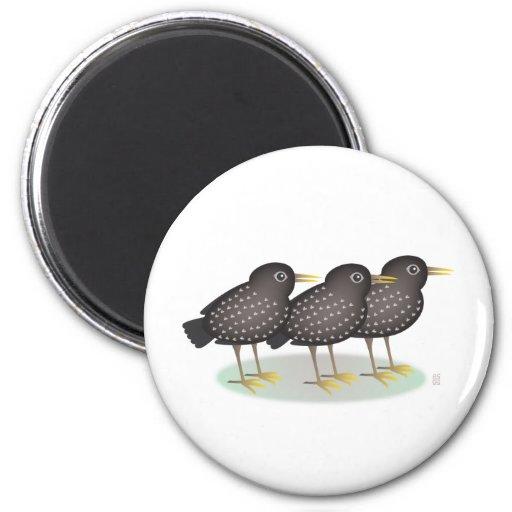 3 starlings iman de nevera