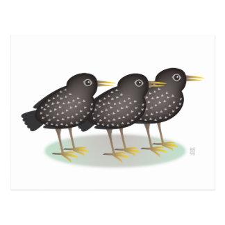 3 starlings postales