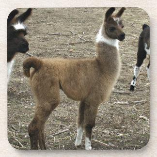3 stooges, Llama style Beverage Coaster