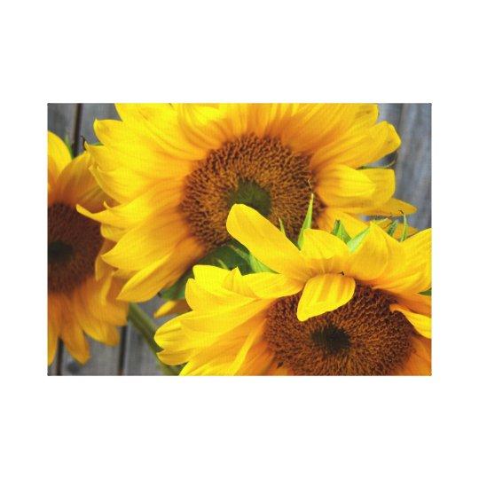 3 Sunflowers Canvas Print