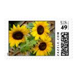 3 Sunflowers Postage Stamp