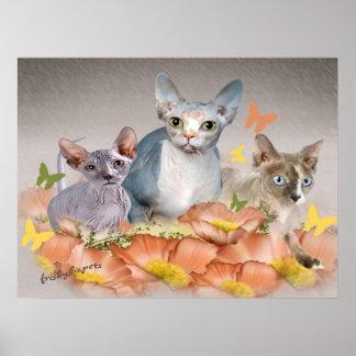 3 tarjetas de los gatitos del sphynx posters