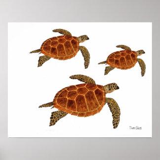3 tortugas de Hawksbill Impresiones