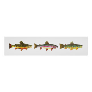 3 Trout - Brook, Brown, Rainbow Long Hoirzontal Poster