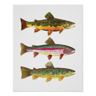 3 Trout for Fly Fishing Fishermen and Fisherwomen Poster
