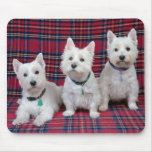 3 Westies Mouse Pad
