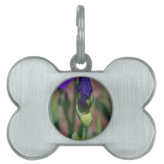 3 Winter is but a Memory.JPG Pet ID Tag
