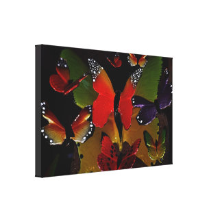 3D Butterflies flying together Canvas Print