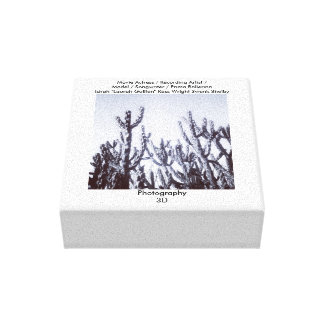 3D Cacti in Black and White Canvas Print