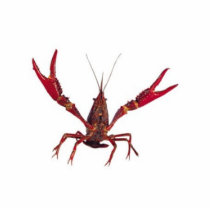 3D Crawfish Ornament